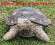 Садовая фигурка «Черепаха малая»