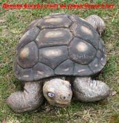 Фигура для сада «Черепаха большая»