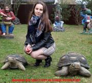 Садовая фигурка «Черепаха большая»