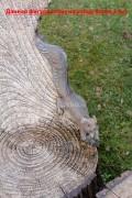 Садовая скульптура «Кресло-пень с совой»