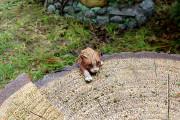 Фигура для сада — Декоративная крышка люка «Кошка на пне»